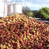 UK Apple Crop Report 2014