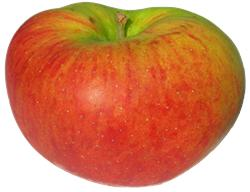 Photo of Blenheim Orange