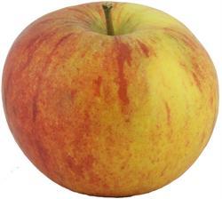 Photo of Cox's Orange Pippin