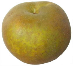 Photo of Egremont Russet