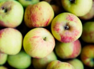 cider-apples