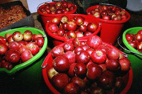 Foxwhelp Cider Apples